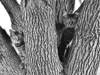sanctry blsd cats 2015 blog