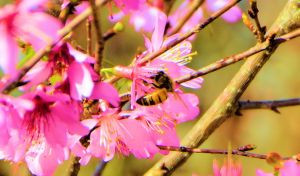 b blessed devotional first bee 2015