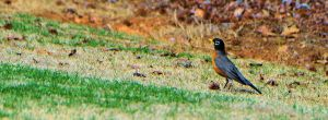 welcome spring 2015 robin blessed devotional