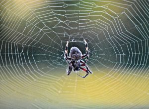 lessons learned from a spider featured photo 2 b is for blessed devotional 10-2015